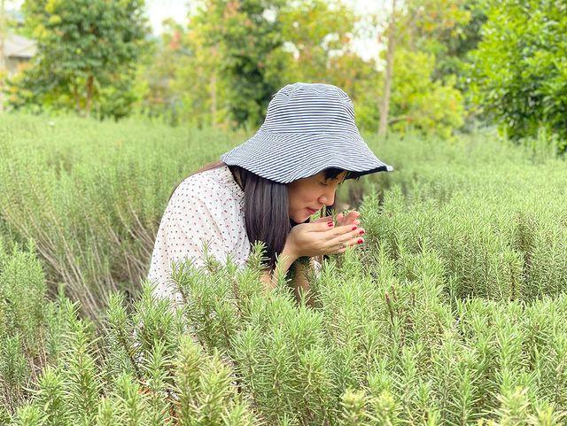 rumah atsiri aromatic garden