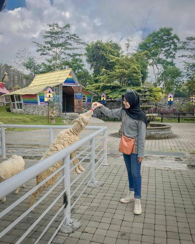 Beternak di Agro Wisata Bhumi Merapi