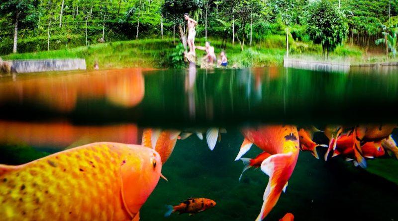 Ikan Segar Wonosobo
